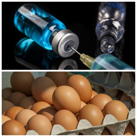 pediatria descomplicada, dra kelly marques oliveira, alergia ao ovo, vacinação, vacina, alergia alimentar, vacina da gripe